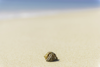 Hermit crab on sandy beach