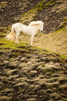 White horse on hill, Iceland