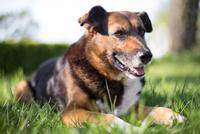 Portrait of dog lying down on grass