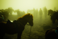 Silhouettes of horses and horsemen standing in field at sunset
