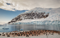 Penguins on coastline, Antarctica