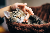 Hand of girl stroking cat
