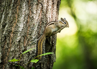 Squirrel climbing on tree
