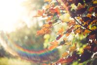 Close-up of autumn tree, Canada