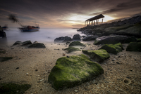 Mossy rocks on beach, Penang, Malaysia