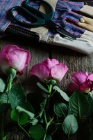 Gloves and scissors next to pink roses (Rosa)