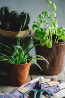 Gardening gloves and scissors next to potted plants