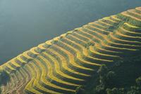 Terraced rice paddies, Vietnam