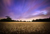Dramatic sunset over wheat field, England, UK