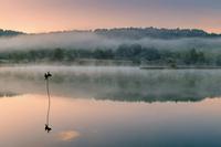 Cormorant perching on pole in foggy lake, Hungary