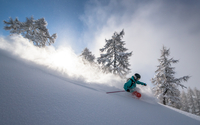 Skiing Deep Powder in the Forrest