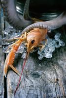 Seafood Thriller