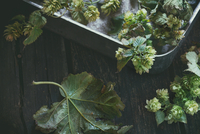 Smells of Autumn: Hop