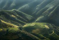 Rice terrace on mountain