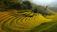 Rice terrace (Mu cang chai) 11098076228| 写真素材・ストックフォト・画像・イラスト素材|アマナイメージズ