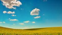 Golden Field 11098076259| 写真素材・ストックフォト・画像・イラスト素材|アマナイメージズ