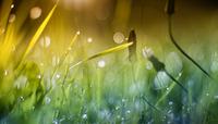 Good Morning Sunshine 11098076357| 写真素材・ストックフォト・画像・イラスト素材|アマナイメージズ