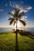 Maui Paradise 11098076387| 写真素材・ストックフォト・画像・イラスト素材|アマナイメージズ