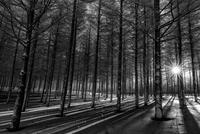 lights and shades in winter 11098076443| 写真素材・ストックフォト・画像・イラスト素材|アマナイメージズ