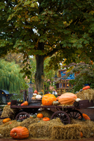 Halloween. 11098076470| 写真素材・ストックフォト・画像・イラスト素材|アマナイメージズ