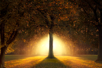 Garden of Eden 11098076486| 写真素材・ストックフォト・画像・イラスト素材|アマナイメージズ