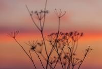 Autumn Repose 11098076585| 写真素材・ストックフォト・画像・イラスト素材|アマナイメージズ