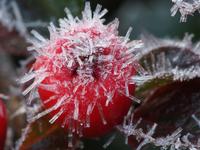 Cold 11098076613| 写真素材・ストックフォト・画像・イラスト素材|アマナイメージズ