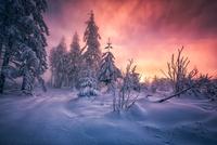 Winter Forest Sunrise 11098076636  写真素材・ストックフォト・画像・イラスト素材 アマナイメージズ