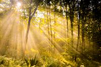 in the forest 11098076956| 写真素材・ストックフォト・画像・イラスト素材|アマナイメージズ