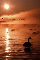 A way of the light shines 11098076997| 写真素材・ストックフォト・画像・イラスト素材|アマナイメージズ