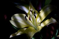 In the Shadows 210 11098077005| 写真素材・ストックフォト・画像・イラスト素材|アマナイメージズ