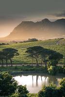 Sun-Kissed Vines 11098077018| 写真素材・ストックフォト・画像・イラスト素材|アマナイメージズ