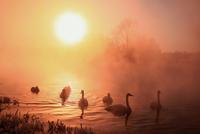 Brightness of the life 11098077262| 写真素材・ストックフォト・画像・イラスト素材|アマナイメージズ
