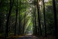 Bospad Limburg 11098077281| 写真素材・ストックフォト・画像・イラスト素材|アマナイメージズ