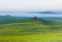 Farmhouse in Tuscany at sunrise 11098077677| 写真素材・ストックフォト・画像・イラスト素材|アマナイメージズ