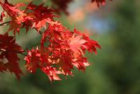 Autumn Sign 11098077716| 写真素材・ストックフォト・画像・イラスト素材|アマナイメージズ