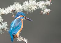 Kinfisher 3