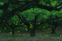 Story of Magical Forest 11098077836| 写真素材・ストックフォト・画像・イラスト素材|アマナイメージズ