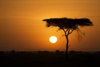 This is Africa . . . 11098077842| 写真素材・ストックフォト・画像・イラスト素材|アマナイメージズ