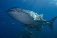 Wonder Of The Oceans