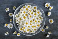 Chamomile flowers in bowl 11098077883| 写真素材・ストックフォト・画像・イラスト素材|アマナイメージズ