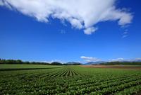 My heart Tokachi field
