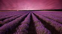 Purple world 11098077909  写真素材・ストックフォト・画像・イラスト素材 アマナイメージズ