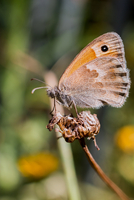 Butterfly Portrait 11098078026| 写真素材・ストックフォト・画像・イラスト素材|アマナイメージズ