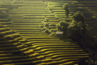 The little cottage on the hill rice terraces. 11098078086| 写真素材・ストックフォト・画像・イラスト素材|アマナイメージズ