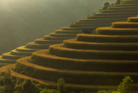 Beautiful Rice Terraces, South East Asia 11098078222| 写真素材・ストックフォト・画像・イラスト素材|アマナイメージズ