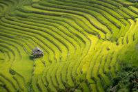 Rice terraces in Mu Cang Chai, North Vietnam 11098078229| 写真素材・ストックフォト・画像・イラスト素材|アマナイメージズ
