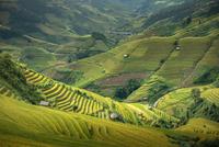 Top view (Mu cang chai) 11098078247| 写真素材・ストックフォト・画像・イラスト素材|アマナイメージズ