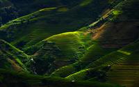 Rice terrace , Vietnam 11098078384| 写真素材・ストックフォト・画像・イラスト素材|アマナイメージズ