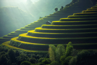 Vietnam Rice fields on terraced 11098078443| 写真素材・ストックフォト・画像・イラスト素材|アマナイメージズ
